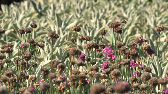 VideoHive Plants 07 10073709