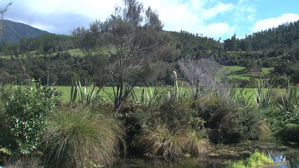 VideoHive Pupu Springs New Zealand 6 10073916
