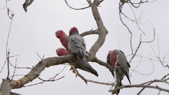 VideoHive Kalbarri National Park 27 10074049