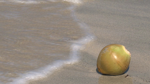 VideoHive Coconut On The Beach 10074320