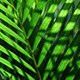 Green Leaf In Nature 329 - VideoHive Item for Sale