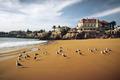 Cascais Seagulls - PhotoDune Item for Sale