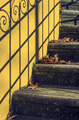 Stairs With Leaves - PhotoDune Item for Sale