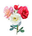 Rose Flowers - PhotoDune Item for Sale
