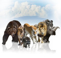 Wild Mammals - PhotoDune Item for Sale