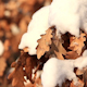 Yellow Oak Leaves Under Snow 1 - VideoHive Item for Sale