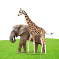 giraffe with elephant - PhotoDune Item for Sale