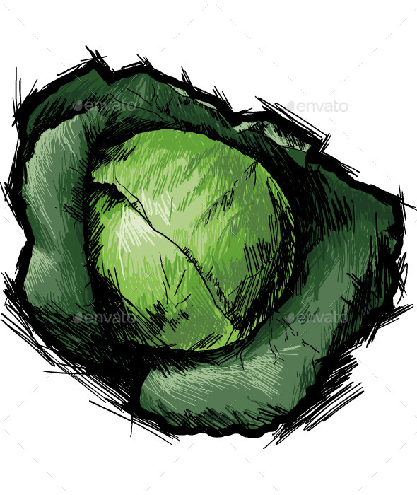 GraphicRiver Cabbage 10091323