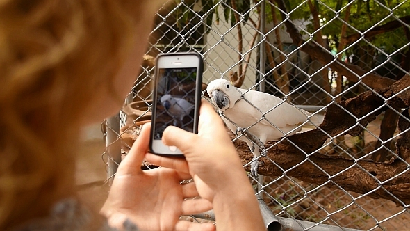 VideoHive Smartphone Taking Picture of Parrot 10091517