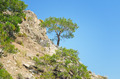 Pine on a mountainside and blue sky - PhotoDune Item for Sale
