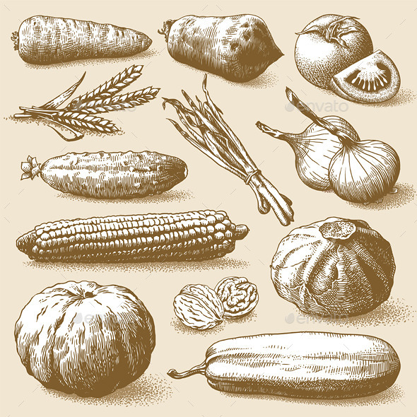 Vegetables Fruits and Plants Vector