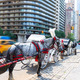 Central Park horse carriage rides in New York - PhotoDune Item for Sale