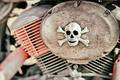 skull - PhotoDune Item for Sale