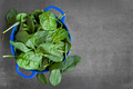 Spinach Leaves in Colander - PhotoDune Item for Sale