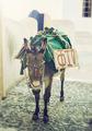 Donkey in Santorini - PhotoDune Item for Sale