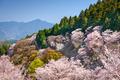 Spring Landscape in Nara, Japan - PhotoDune Item for Sale