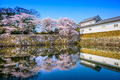 Cherry Blossoms in Hikone, Japan - PhotoDune Item for Sale