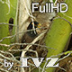 Myna Nest - VideoHive Item for Sale