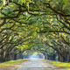 Country Road Lined with Oaks - PhotoDune Item for Sale