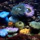coral garden - PhotoDune Item for Sale