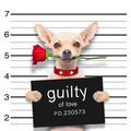 valentines  mugshot dog - PhotoDune Item for Sale
