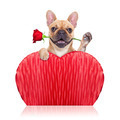 valentines dog - PhotoDune Item for Sale