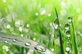 dew drop closeup - PhotoDune Item for Sale