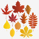 Autumn leaves - vector - GraphicRiver Item for Sale