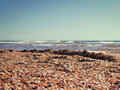 marine shelly beach in summer sunlight - PhotoDune Item for Sale