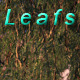 Leafs - VideoHive Item for Sale