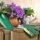 flowers and gardening tools - PhotoDune Item for Sale