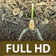 Wheat Growing 6 - VideoHive Item for Sale