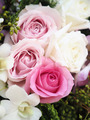pink rose in wedding day - PhotoDune Item for Sale