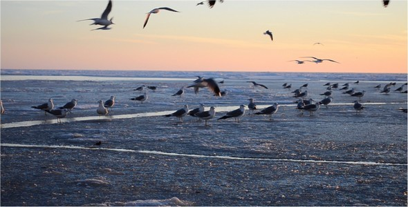VideoHive Seagulls 3 10126711