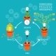 Crowdfunding Process Infographic - GraphicRiver Item for Sale