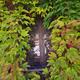 leaf window - PhotoDune Item for Sale