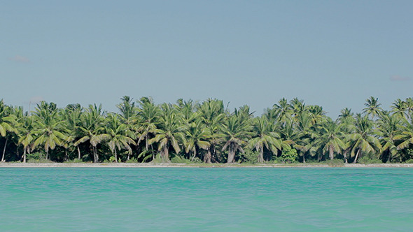 VideoHive Sea Shore With Palms And Clear Blue Water 10133581