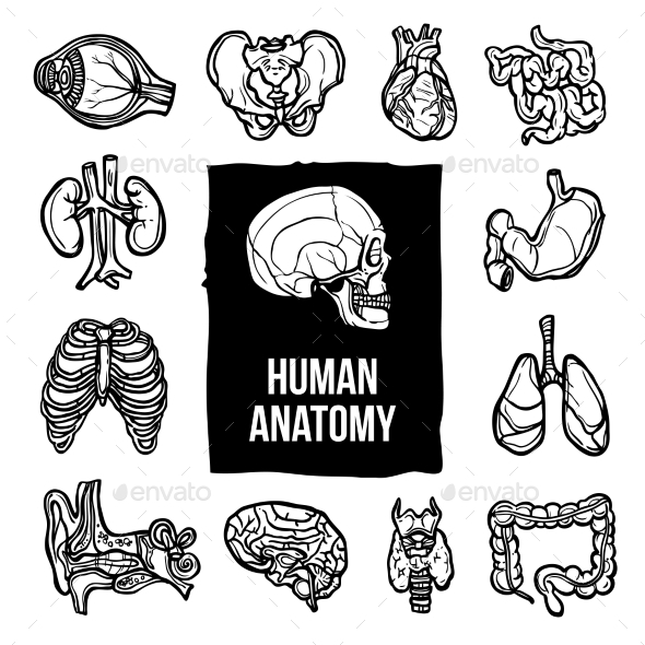 GraphicRiver Anatomy Icons Set 10134107