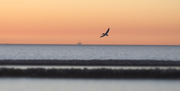 VideoHive Birds at Sunset 10134417