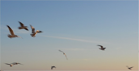 VideoHive Seagulls 4 10135682