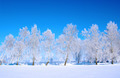 Frosted trees - PhotoDune Item for Sale