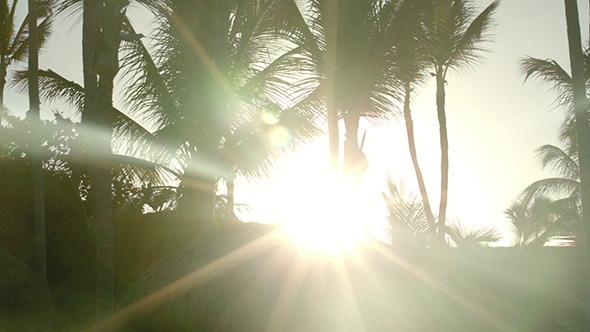 VideoHive Bright Evening Sun Shining Among The Palms 10143635