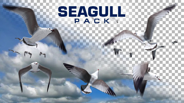 VideoHive Seagull Pack 10117253