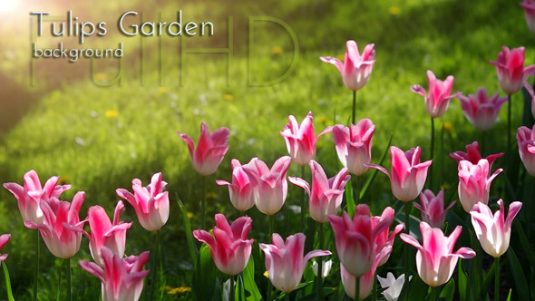 VideoHive Flowers in Spring Garden 10144672