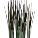 Reedmace - 3DOcean Item for Sale