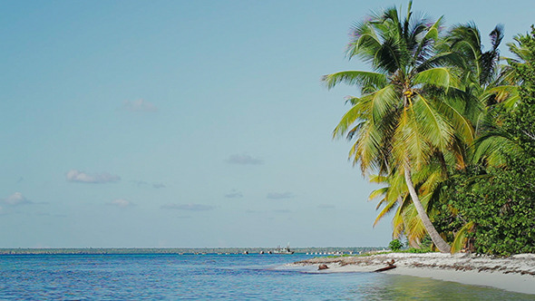 VideoHive Exotic Scene With Palms And Sea Vacation In Tropic 10147946