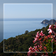 Seaview And Flowers - VideoHive Item for Sale