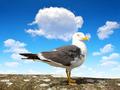 Seagull - PhotoDune Item for Sale
