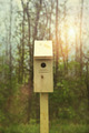New nesting box set out for Spring - PhotoDune Item for Sale
