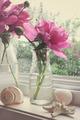 Peony flowers in milk bottles in the window - PhotoDune Item for Sale